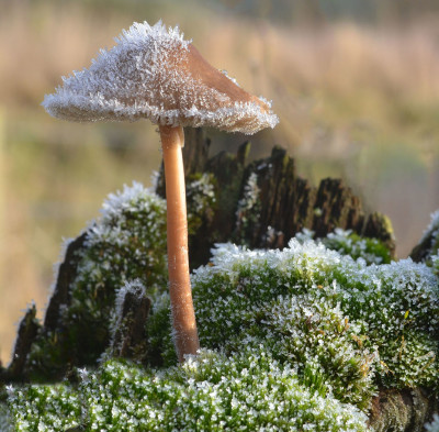 fungi in the frost
