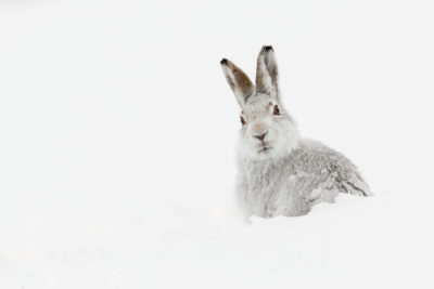 Mountain Hare - Raymond Leinster